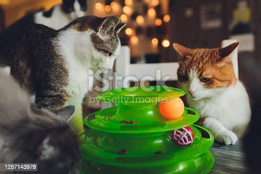 Cat plays with a ball in a special toy for cats
