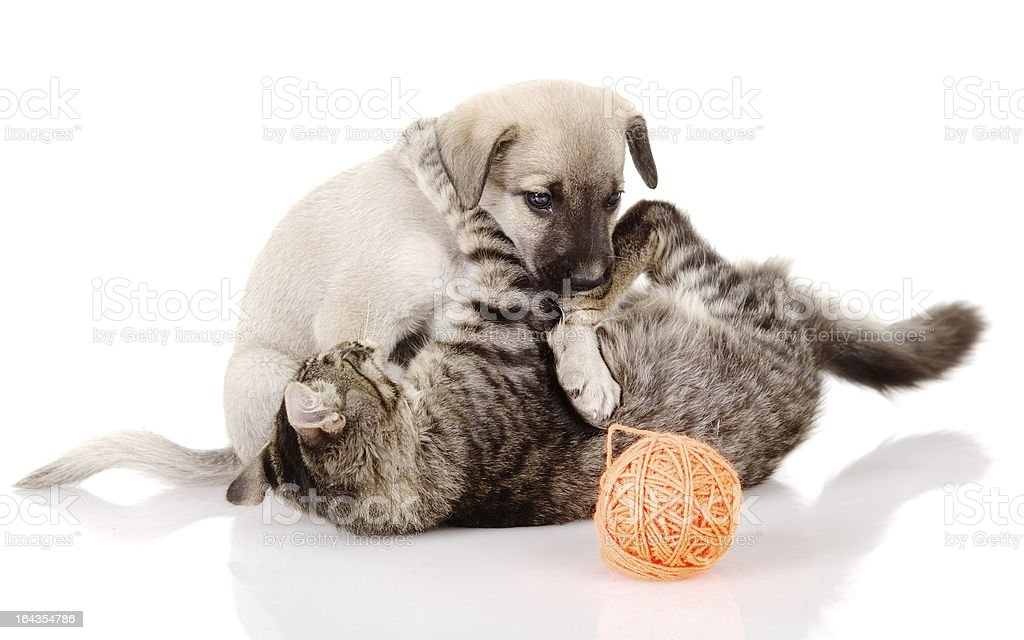 cat plays with a dog stock photo