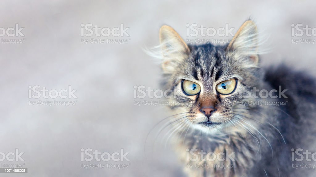 cat portrait expressing emotion of surprise. Copy space, funny animal