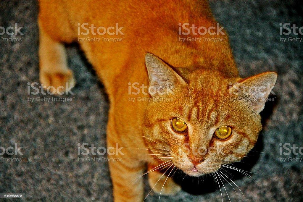 Cat portrait in flash lighting stock photo