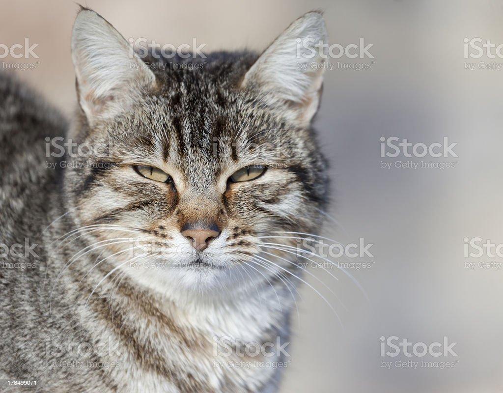 Cat portrait royalty-free stock photo