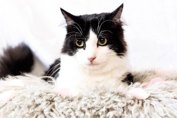 Cat Portrait – zdjęcie