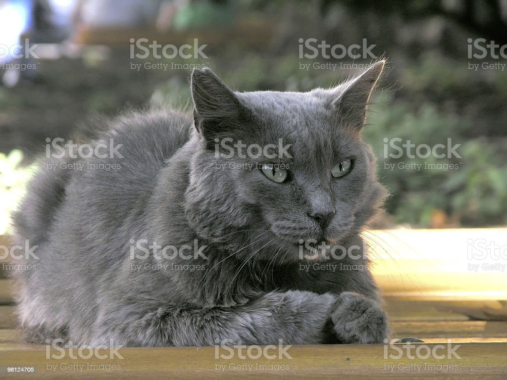 cat portrait royalty-free stock photo