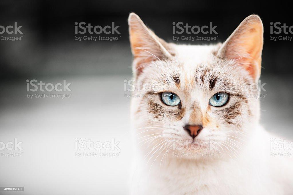 Retrato de gato com fundo em tons de cinza - foto de acervo