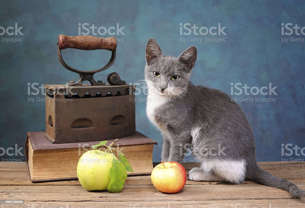 Cat posing next to an old irons royalty-free stock photo
