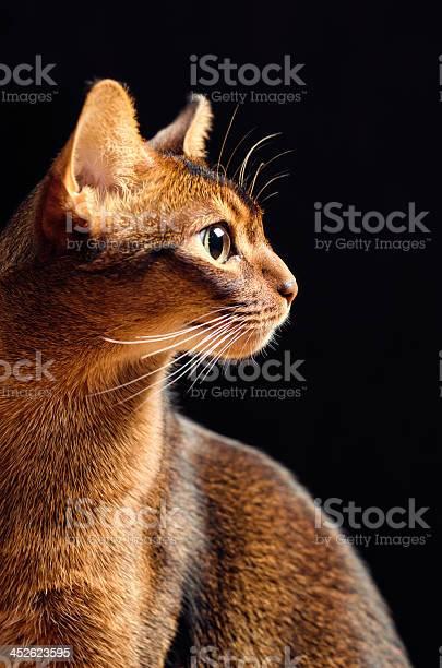 Cat profile picture id452623595?b=1&k=6&m=452623595&s=612x612&h=b0p7wagx1iwh xkico7vdgwd6gsb idxrzdfaczc0tw=