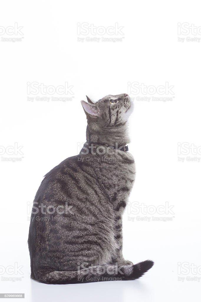 Cat profile. stock photo
