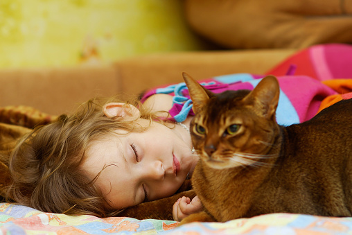 Cat protects dream of child