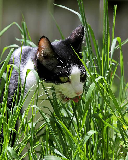 Cat Prowling II stock photo