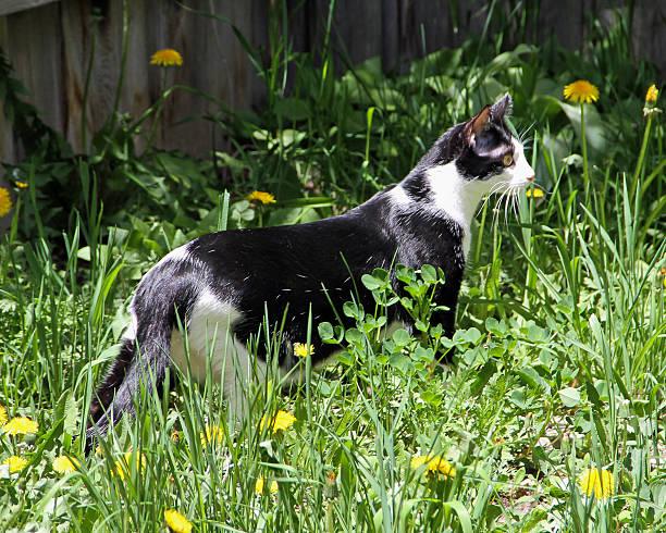 Cat Prowling stock photo