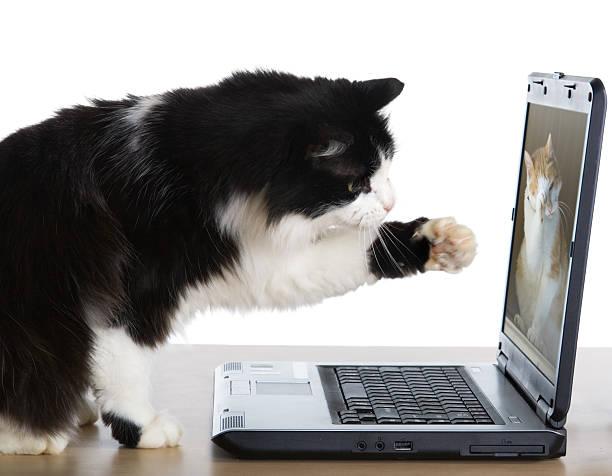 Cat pulls a paw to the laptop picture id94504571?b=1&k=6&m=94504571&s=612x612&w=0&h=jmv40w2idoljypszm9s3eslmwmgdhy2qkly7qtxnlhk=