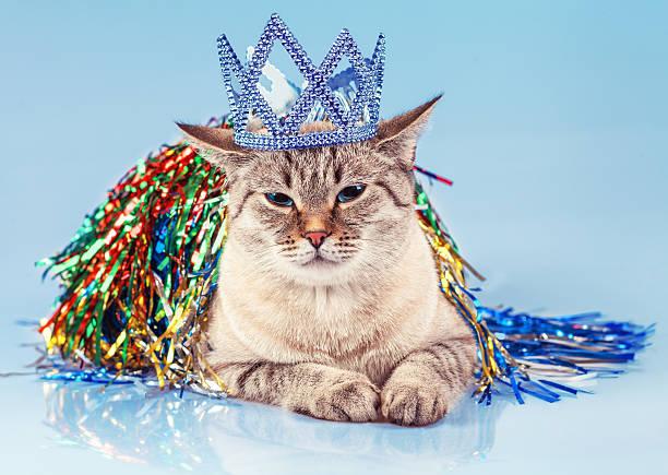 Cat queen picture id530900195?b=1&k=6&m=530900195&s=612x612&w=0&h=gq8w7pmlijdlaigdhsjcttait3y3ahp43gaywgg7dia=