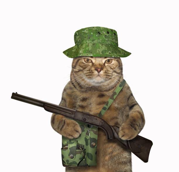 Cat ranger with a rifle 2 picture id1161334937?b=1&k=6&m=1161334937&s=612x612&w=0&h=2jfhl13eiu9w0otpatitx kdolhkhxsq1skqkhyg1zi=