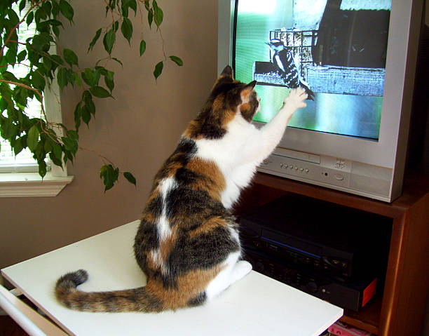 Cat Reaching for Bird on Television stock photo