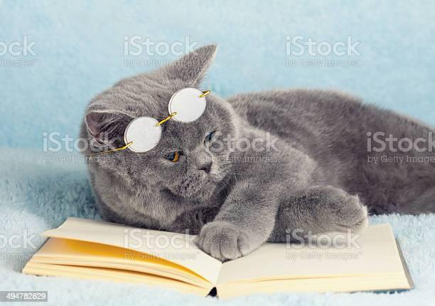 Cat reader picture id494782629?b=1&k=6&m=494782629&s=612x612&h=l8duoszb9t5gqzogt1whcowd2z vjnvs ydxpjtkawm=