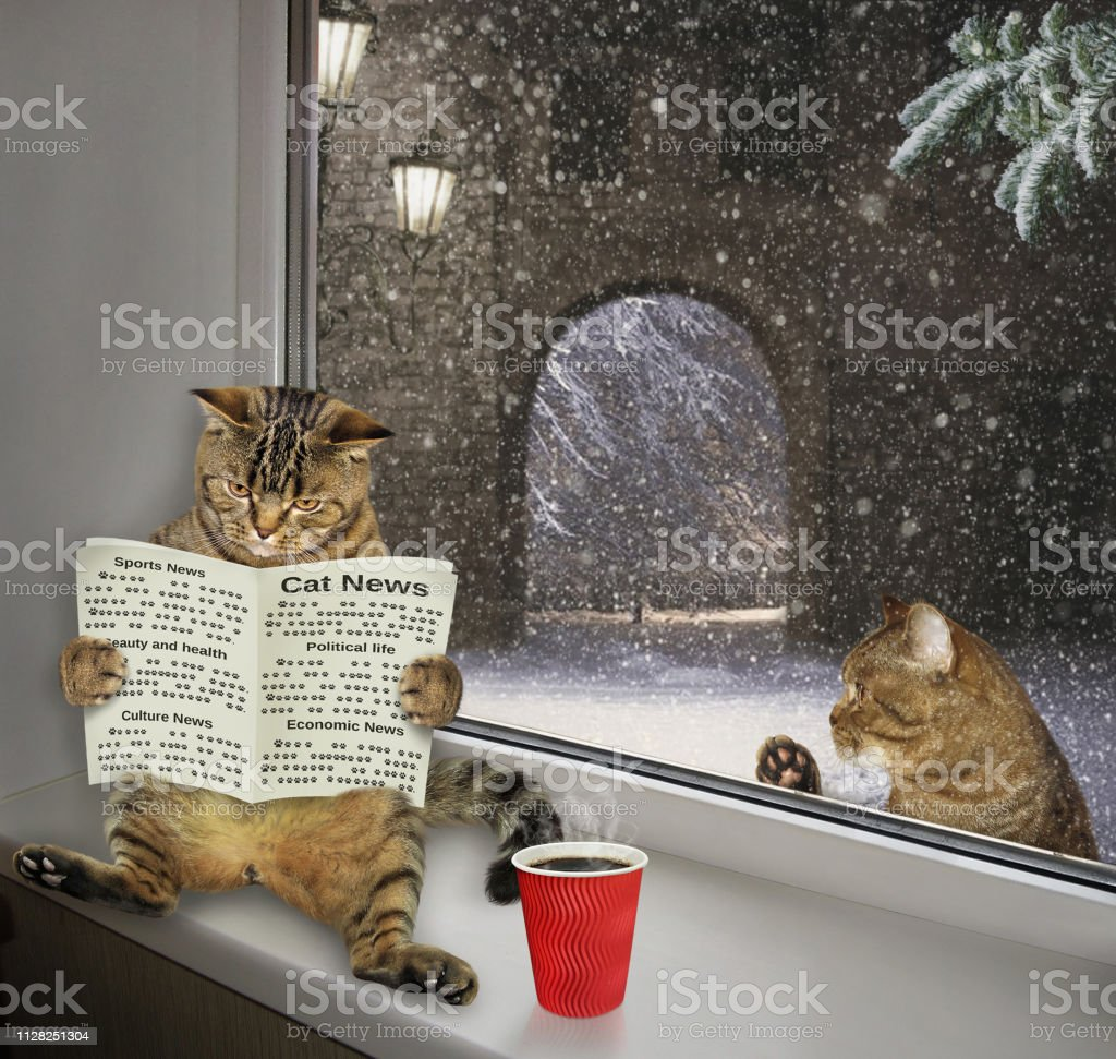 The funny cat is reading a newspaper and drinking coffee on the...
