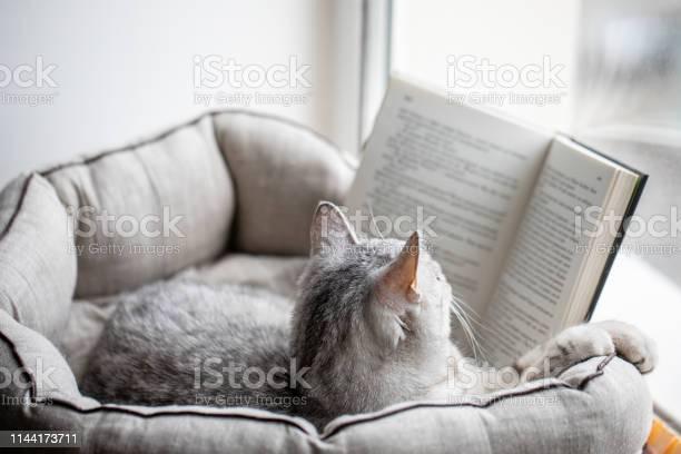 Cat reads a book on a window sill picture id1144173711?b=1&k=6&m=1144173711&s=612x612&h=etj9oafz1hb7px6dyuaxsjvxqx6ayg a6tcfjqedshy=