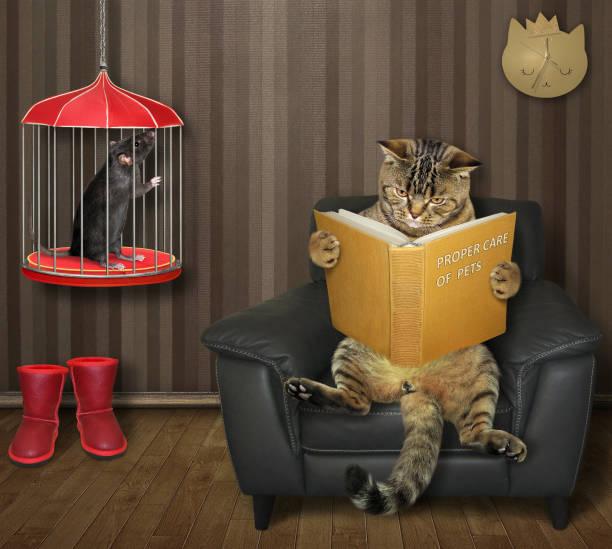 le chat lit le livre près de la cage avec le rat - cage animal nuit photos et images de collection