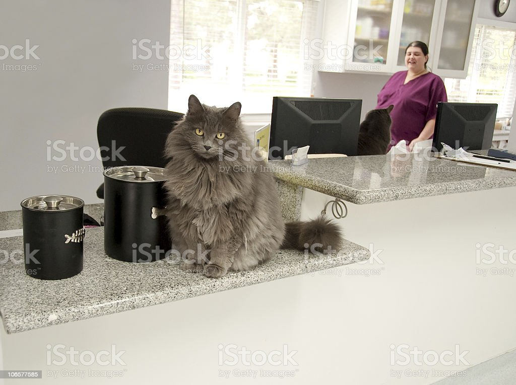 cat receptionist stock photo