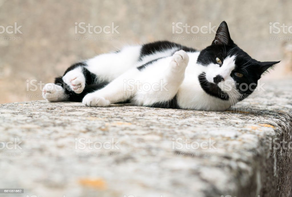 Cat relaxing on a stone wall royalty-free stock photo