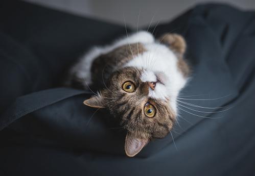 cat relaxing on bean bag