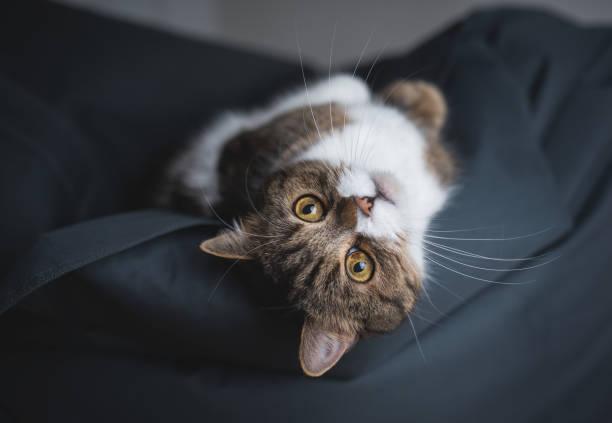 cat relaxing on bean bag stock photo