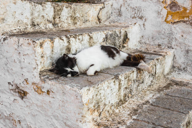 A cat relaxing on stone steps in Hydra. Stray cats in greek island, Greece stock photo