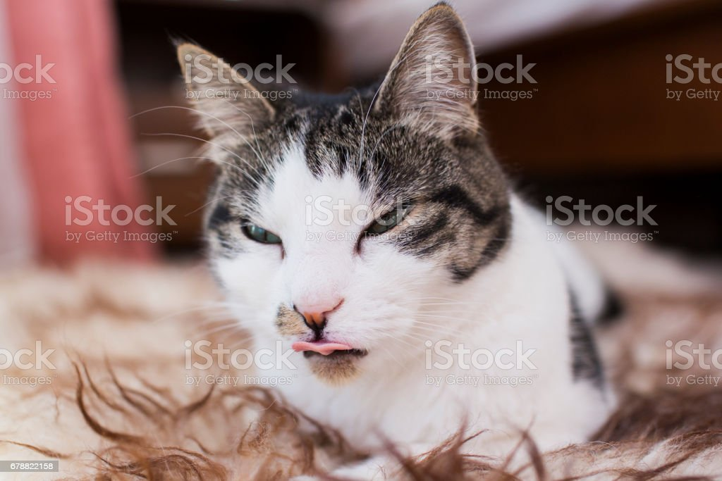 cat relaxing on the carpet royalty-free stock photo