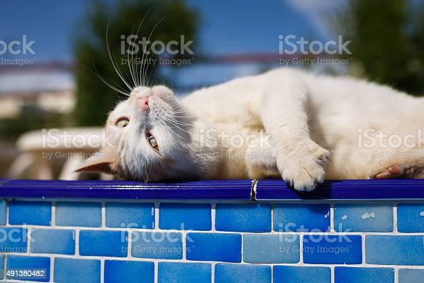Cat resting beside the pool picture id491380482?b=1&k=6&m=491380482&s=612x612&h=fuyrtubrsplrweg d51kjcnyy5z2ygigrqq8svsldls=