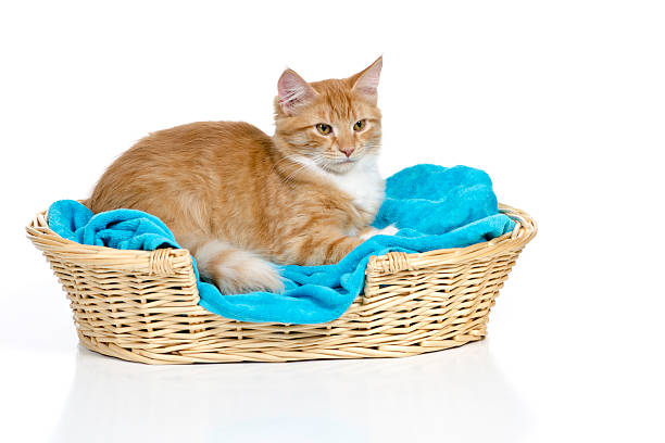 Cat Resting In a Cozy Bed stock photo