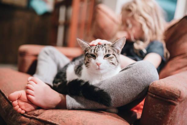 Cat resting in lap of little girl on armchair picture id892287718?b=1&k=6&m=892287718&s=612x612&w=0&h=atotwomo pcgdvqkozudiggqcqowasgxt5sid 5yhnu=