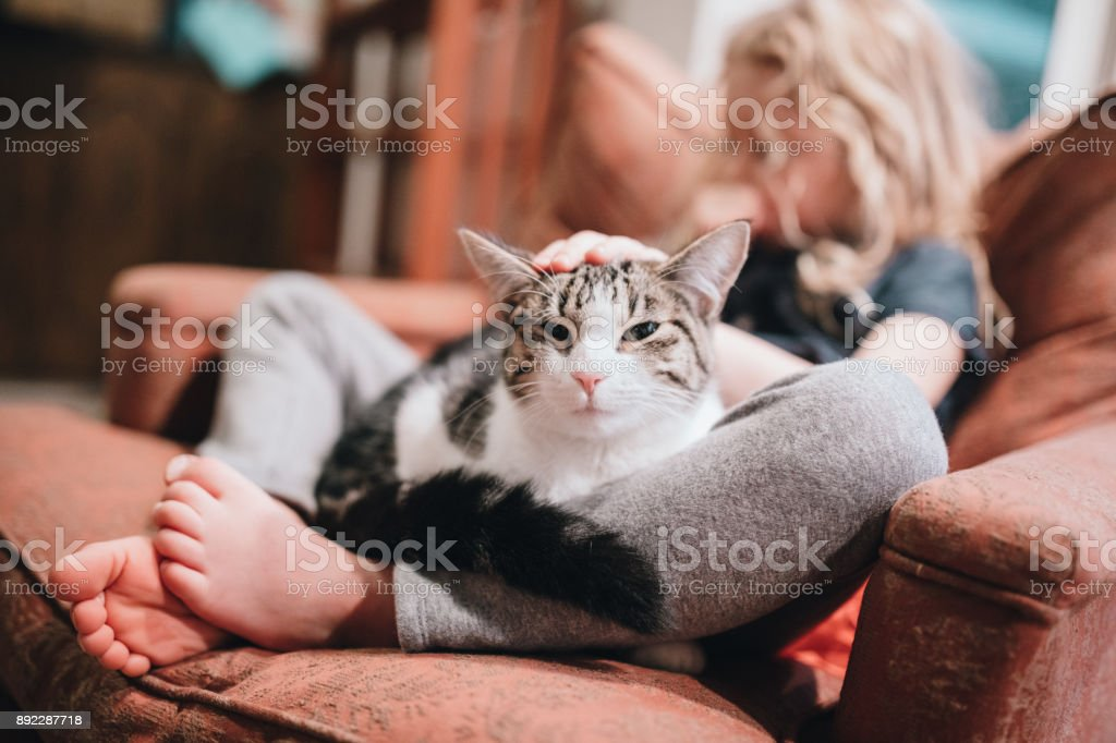 Cat Resting in Lap of Little Girl on Armchair stock photo