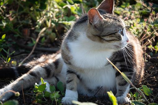 Foto de Gato Descansando Na Grama Ao Pôr Do Sol e mais fotos de stock de Animal