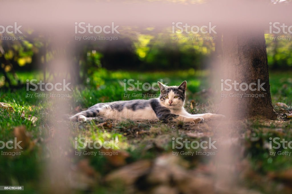 Cat resting on green grass royalty-free stock photo