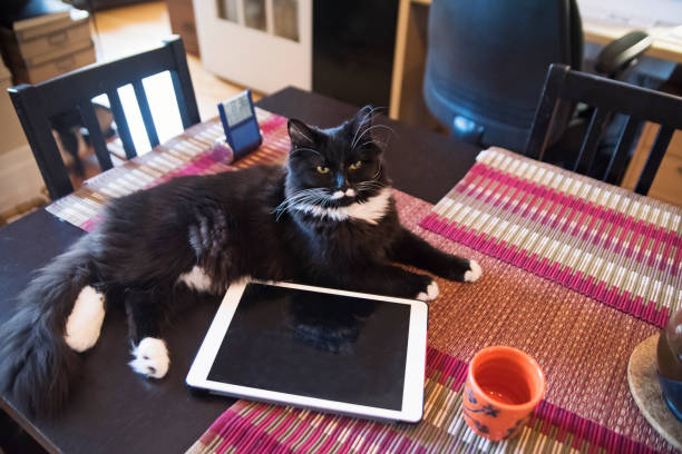Cat resting on table with tea cup and digital tablet. stock photo