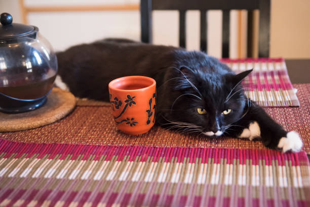 Cat resting on table with tea cup. stock photo