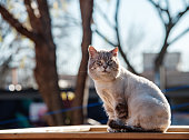 Cat resting on the outdoor deck. Back yard of the urban home on sunny morning.