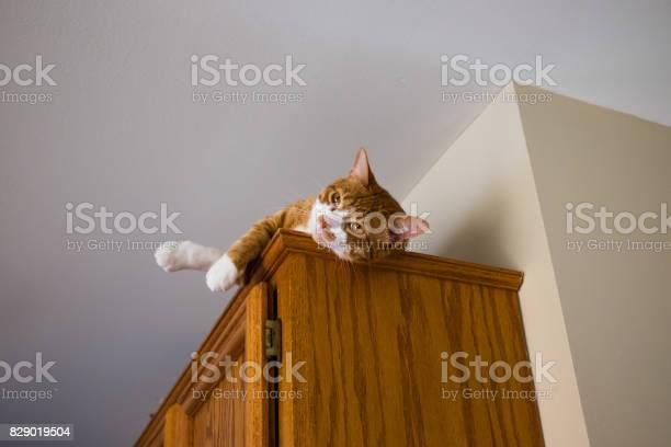 Cat resting on top of cabinet picture id829019504?b=1&k=6&m=829019504&s=612x612&h=zteloseopqfj n5 ddvbtqyvphoh9px2qfyweej1lxc=
