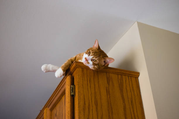 katze ruht auf schrank - katzenschrank stock-fotos und bilder