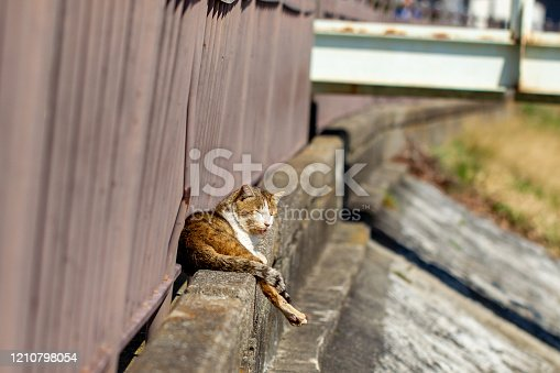 Cat resting in the sun on the bank
