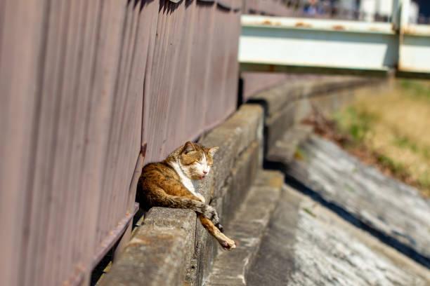 Cat resting stock photo