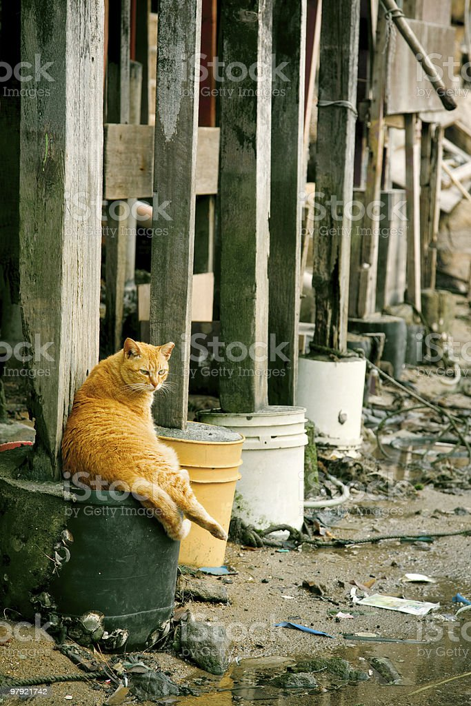 Cat resting under the base royalty-free stock photo