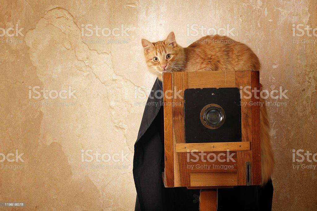 cat retro photographer with vintage camera