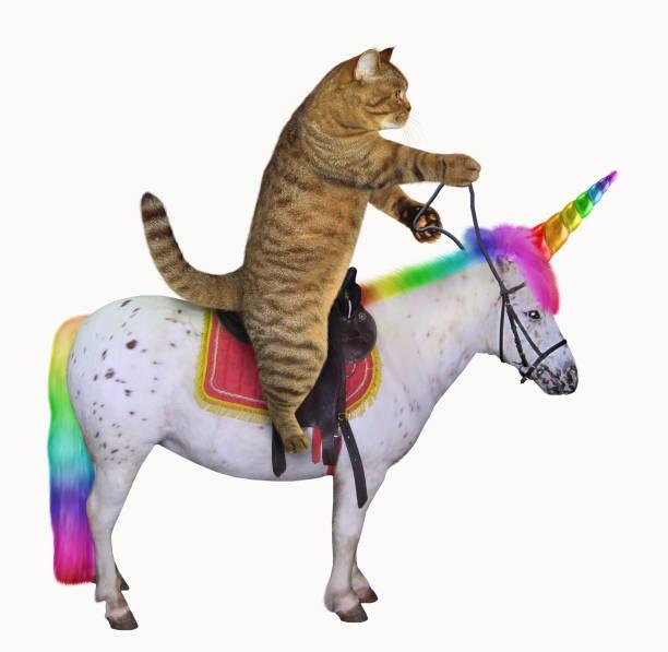 Cat rides the unicorn picture id1029922006?b=1&k=6&m=1029922006&s=612x612&w=0&h=atjqdyyaqaziejosna urgvj9iwokqn08xkmsi z4 g=