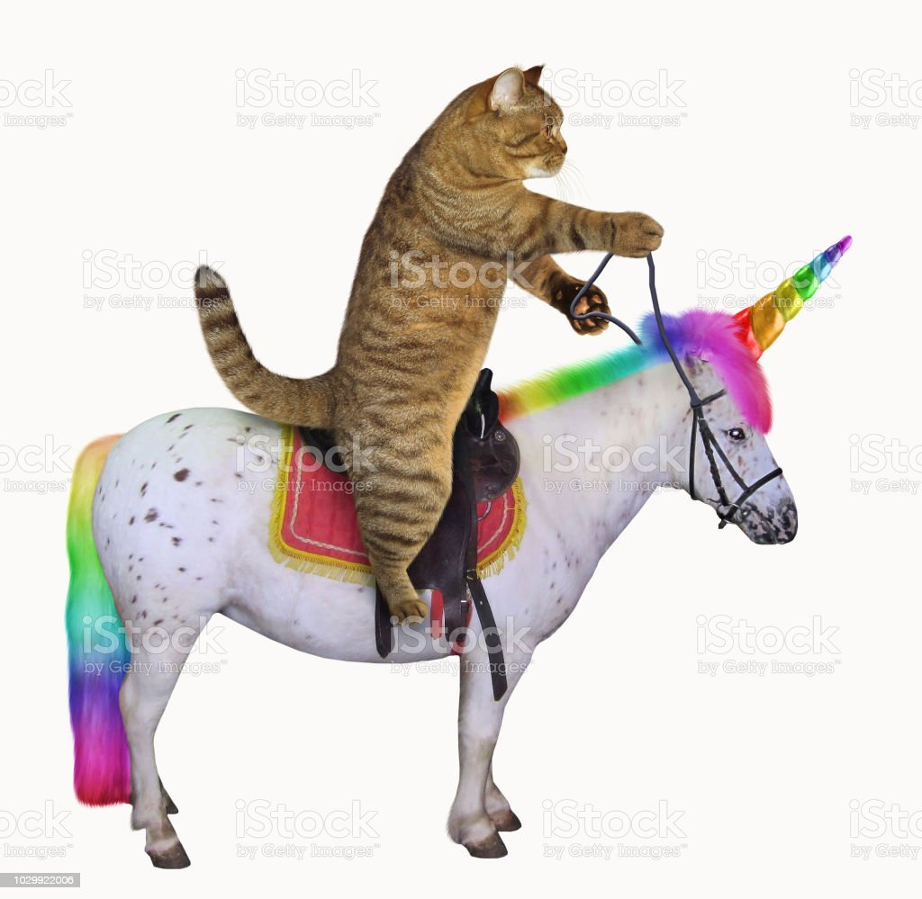 Cat rides the unicorn stock photo