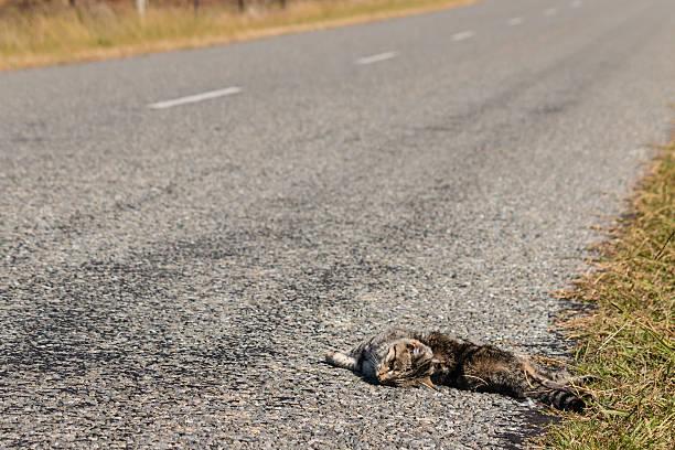 gato Roadkill deitada em lado da rua - foto de acervo