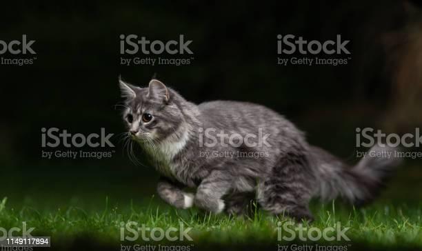 Cat running picture id1149117894?b=1&k=6&m=1149117894&s=612x612&h=ahqq2yvwywj6y0on0f4ug9mlk9iccq2sy9eclybzjvi=