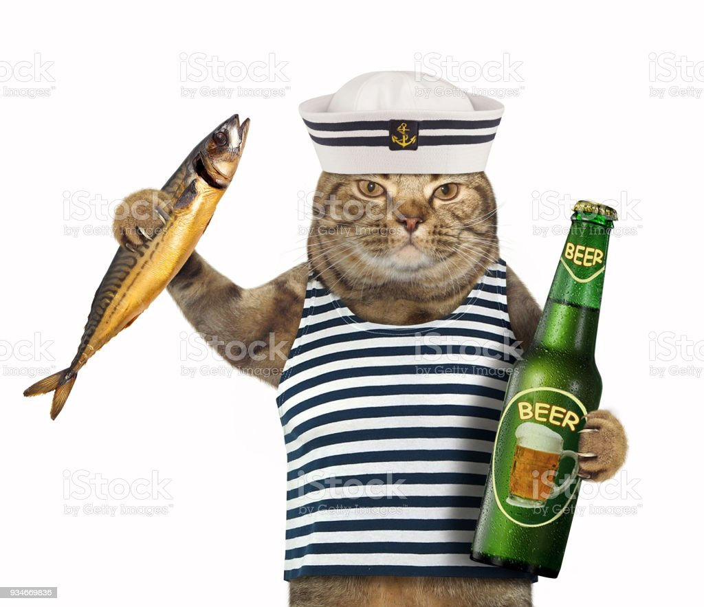 Cat sailor with beer 2 stock photo