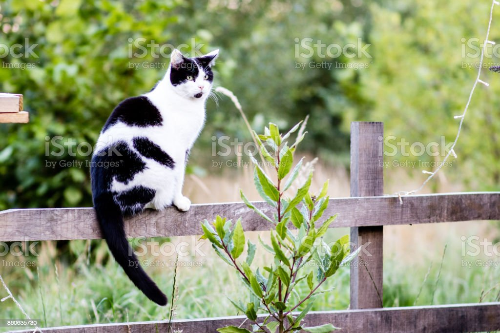 Cat sat on a fence with copy space stock photo