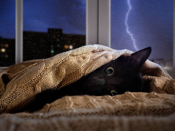 Cat scared of thunder and lightning outside the window. Kitten hiding under the blanket Cat scared of thunder and lightning outside the window. Kitten hiding under the blanket scared cat stock pictures, royalty-free photos & images